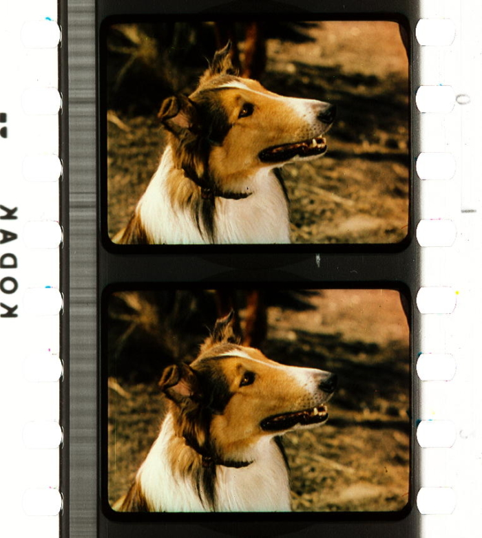 a4b774992 Lassie Come Home (1943) | Timeline of Historical Film Colors
