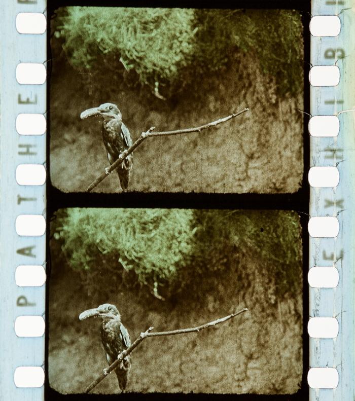 Oiseaux sauvages des monts d'Ecosse (1914)