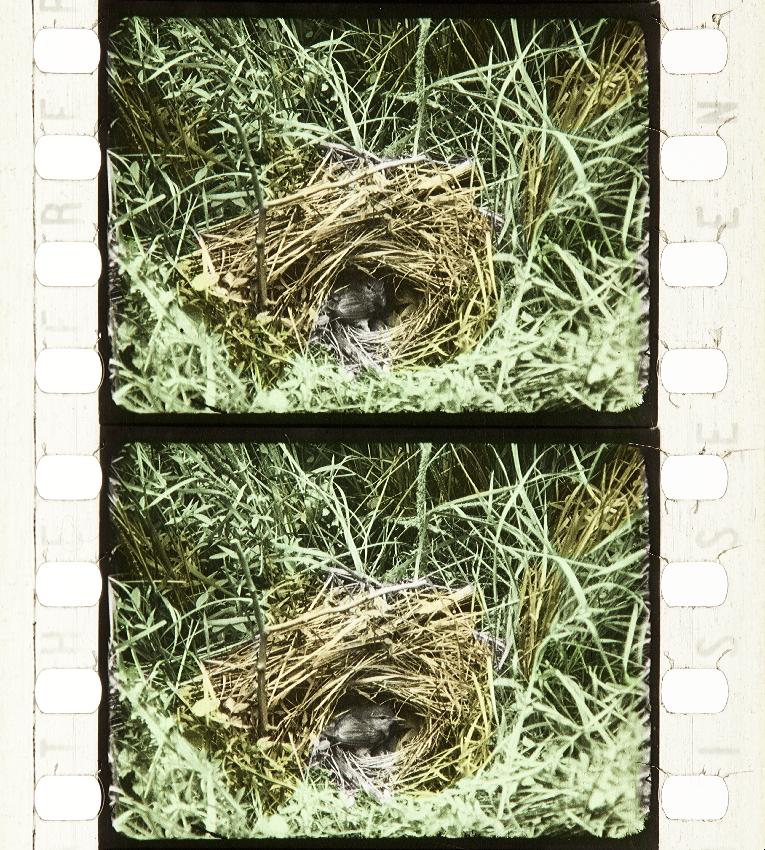 Oiseaux Sauvages Des Monts D Ecosse 1914 Timeline Of