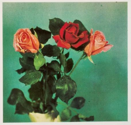 CoePhotography_Gasparcolor_1934.jpg
