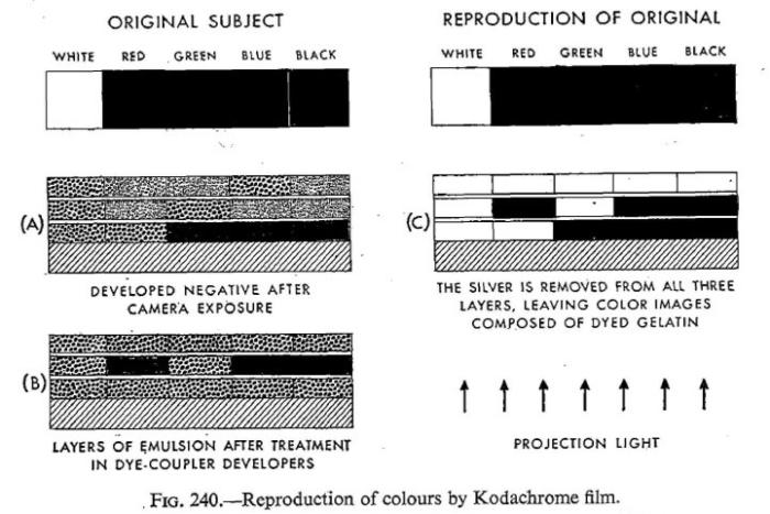 Cornwell-Clyne_Kodachrome reversal_1951-2