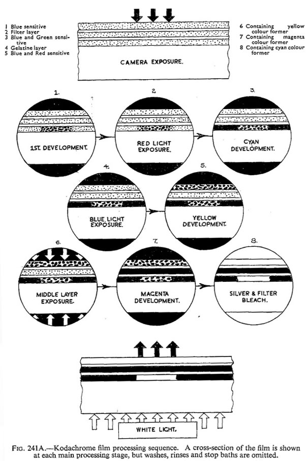 Cornwell-Clyne_Kodachrome reversal_1951-5