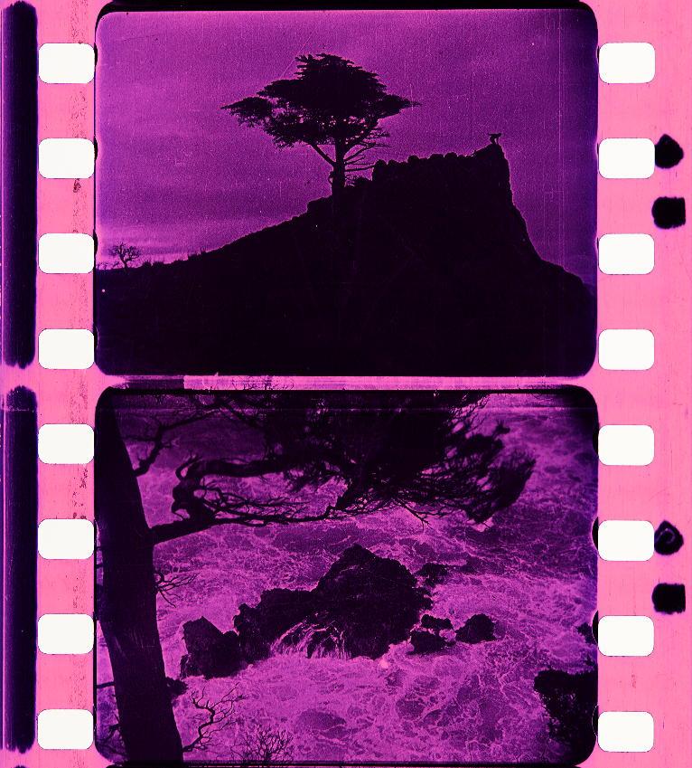 06f7c6da95b The Soul of the Cypress (1920)