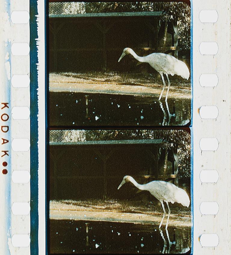 Sennett Color | Timeline of Historical Film Colors