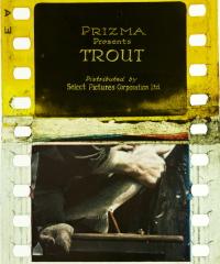 Trout (1919)