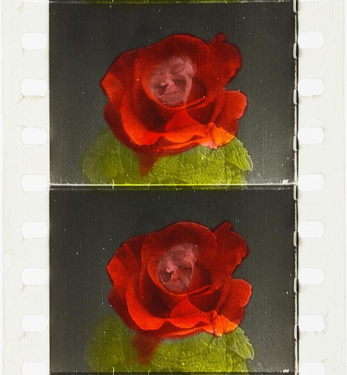 Three American Beauties 1906 Timeline Of Historical Film