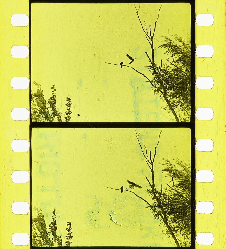 Kestrel Af Hökfamiljen Timeline Of Historical Film Colors