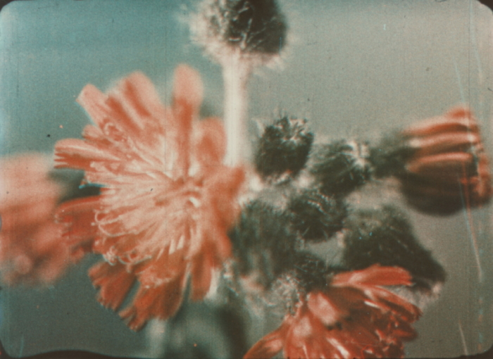 a3d3d478a2d Prizma II | Timeline of Historical Film Colors