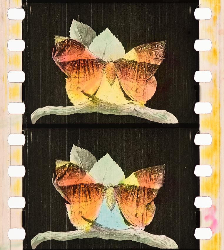 Métamorphoses Du Papillon 1904 Timeline Of Historical