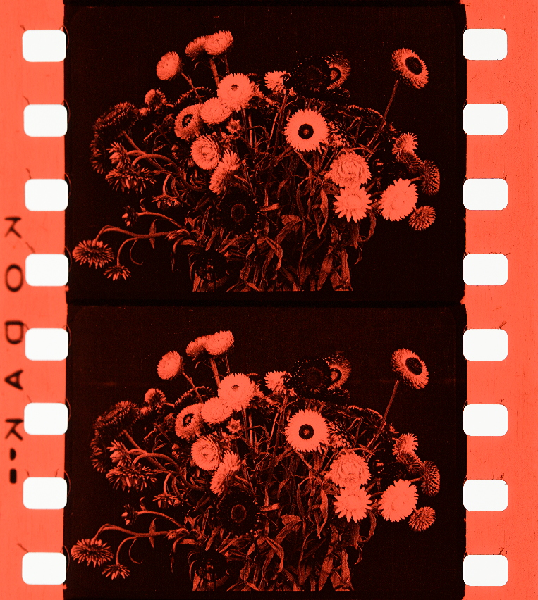 Historical of Film Flowers of London1924Timeline Colors 9IeW2YbEDH