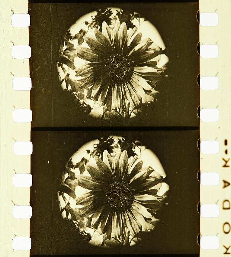 eccb346f89 Flowers of London (1924) | Timeline of Historical Film Colors