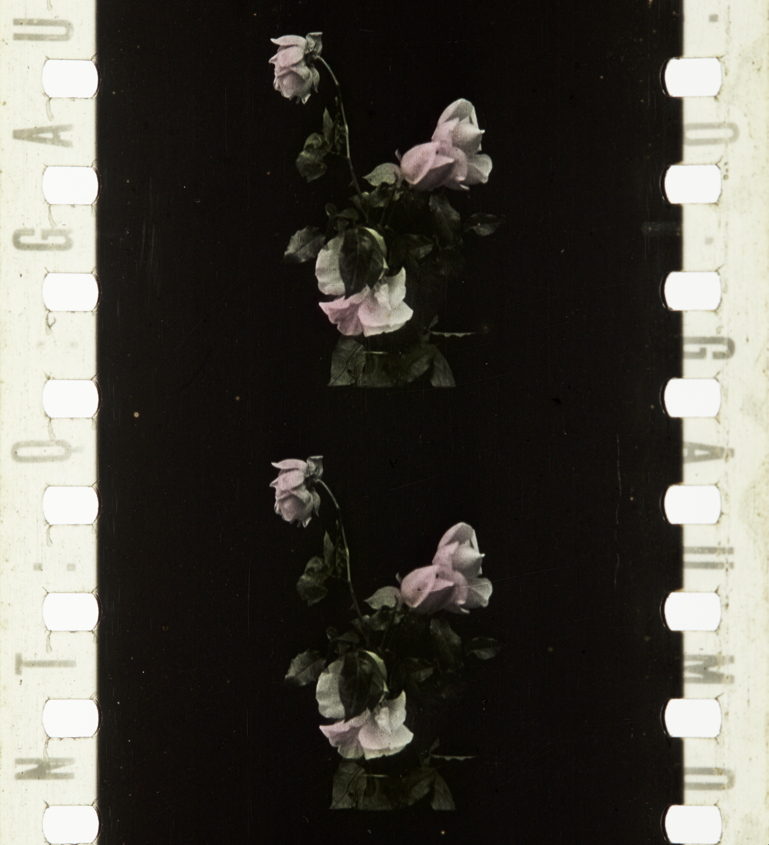 Opening Flowers 1911 Timeline Of Historical Film Colors