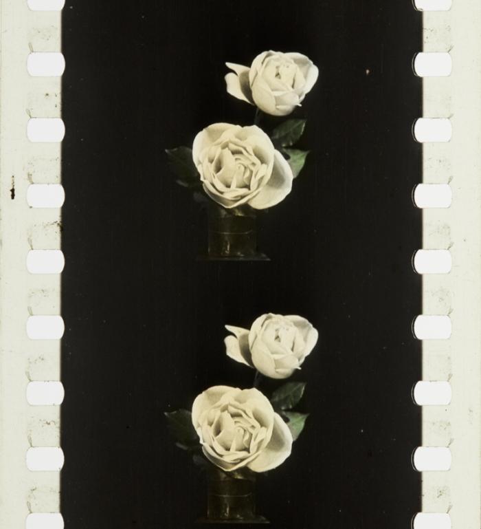 Imagination Crafts Champagne Rose Flourish stencil