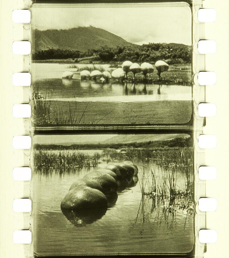 Bali (1925) | Timeline of Historical Film Colors