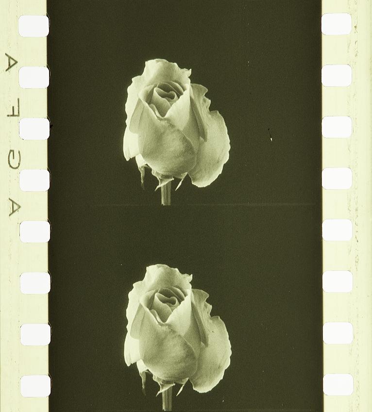 fleurs artificielles couleur no. 16 40 roses en bois sunset